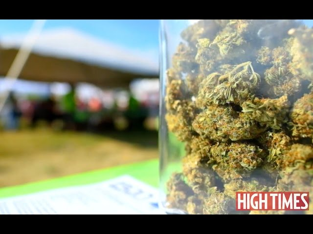 2016 Michigan Medical Cannabis Cup: Highlights