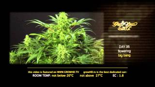 Big Bang - Green House Grow Sessions