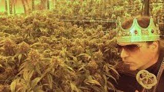 Der Cannabis König HD - Geschäfstmodell Kriminell