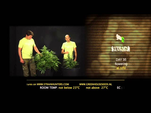 El Niño - Green House Grow Sessions