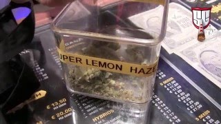 Green House Coffeeshop Tour - Amsterdam's LAST Cannabis Cup - Smokers Guide TV Amsterdam