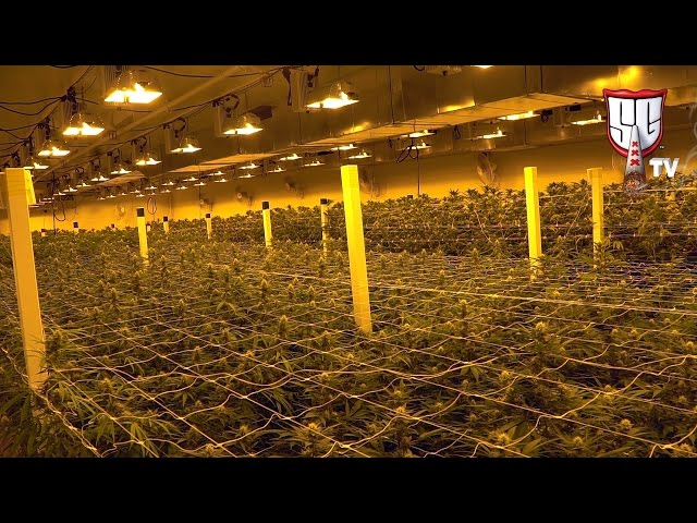 Growing Cannabis in Las Vegas - Greenway Medical - Smokers Guide TV Nevada