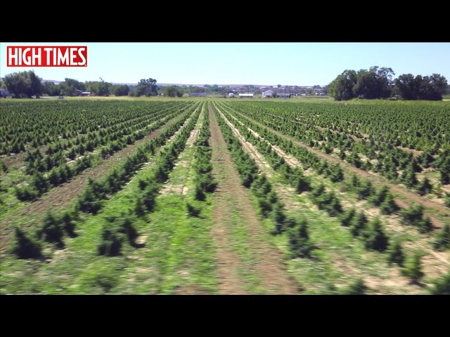 HIGH TIMES Visits a 45 Acre CBD Farm