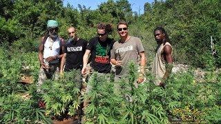 Strain Hunters Jamaica Expedition (Full Length)