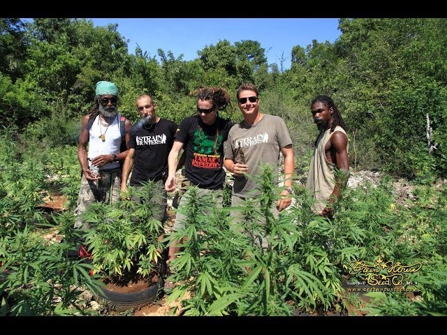 Strain Hunters Jamaica Expedition (Full Length)