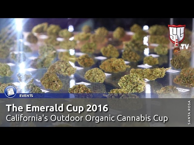 The Emerald Cup 2016 - Organic Outdoor Cannabis - Smokers Guide TV California