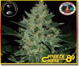 Freeze Cheese '89 feminisiert