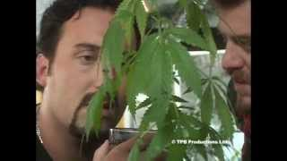 Jorge Cervantes - Ultimate Grow [DVD 1] (EN)
