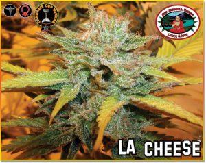 L.A. Cheese feminisiert
