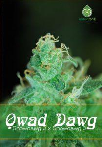 Qwad Dawg regulaer