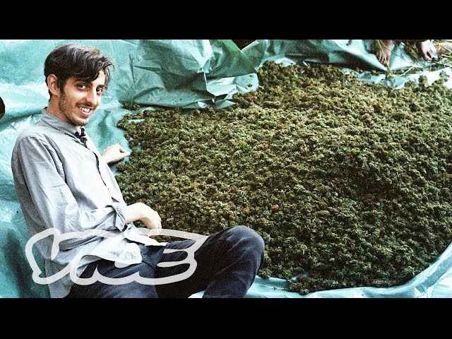 Swaziland: Gold Mine of Marijuana (Part 1/2) (EN)