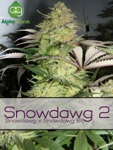 snowdog 2 regulaer