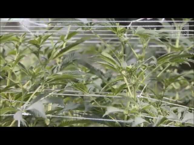 Die Vice-Reportage zu Cannabis in Österreich
