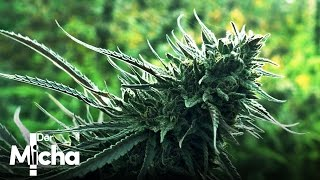 DerMicha - Folge 12 - Ashland | Medical Weed