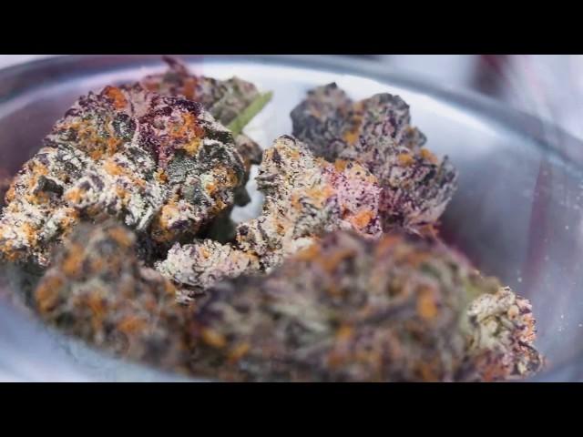 High Times Cannabis Cup Central Valley 2018 Recap