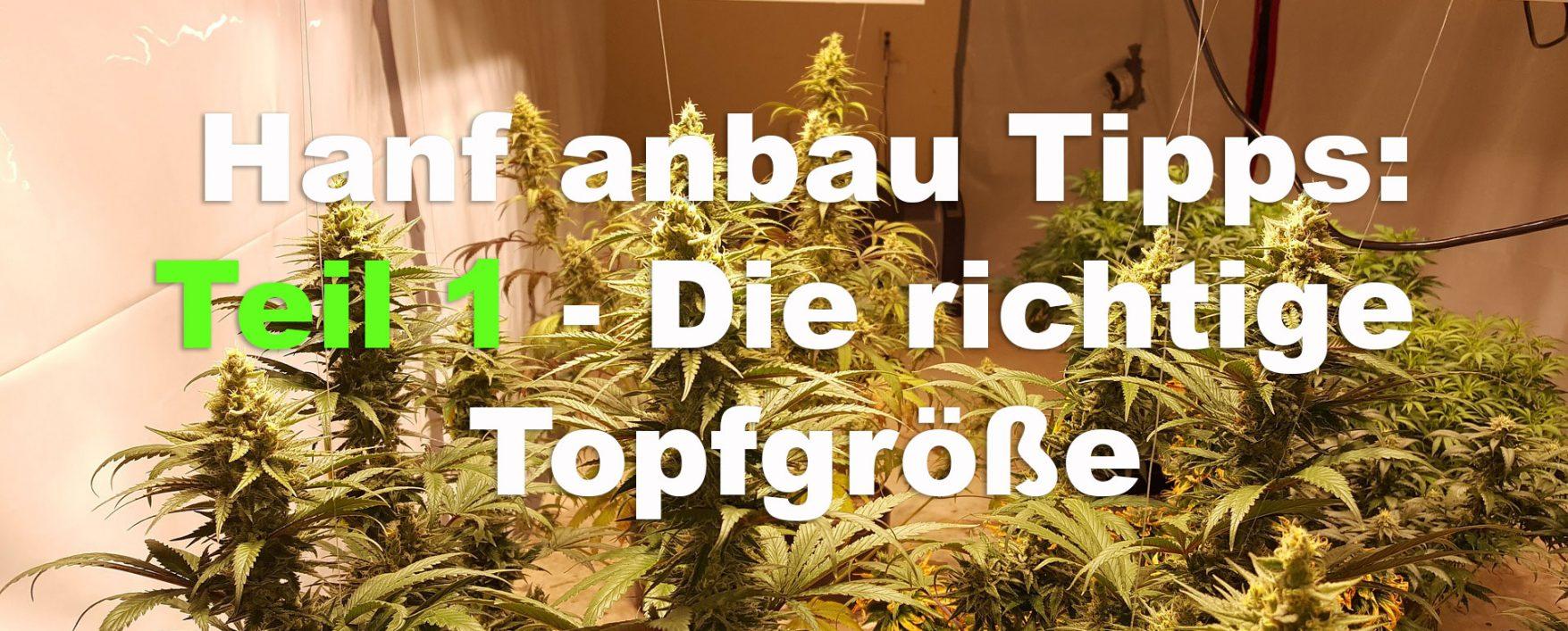 legalen Rahmen Archive - Hanf TV - Deine Plattform für Cannabis Hanf ...