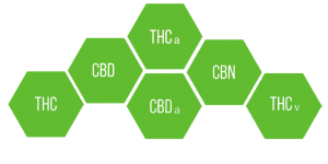 What-Are-Cannabinoids-Solful-Sonoma-County-Dispensary-1-1024x512