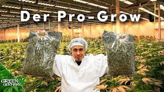 Wie die PROFIS Cannabis ANBAUEN